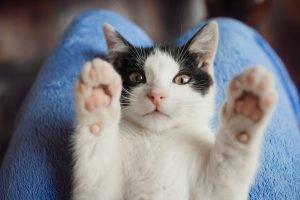garanzia sos gatto consulente felino