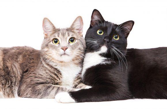Convivenza tra Gatti: i 5 Segreti che non conosci…