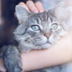 consulenza per la felicità del tuo gatto