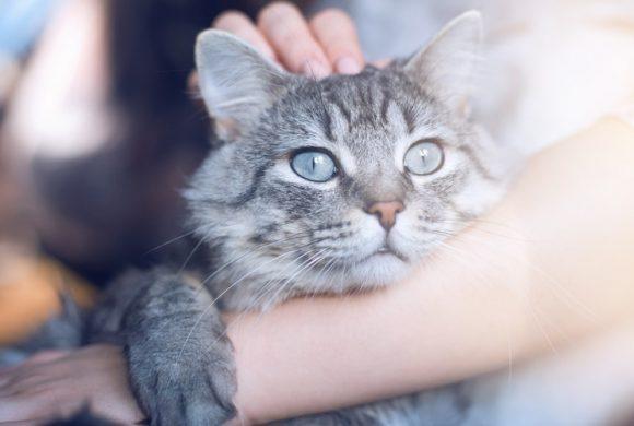 Se vuoi migliorare il benessere e la felicità del tuo Gatto…