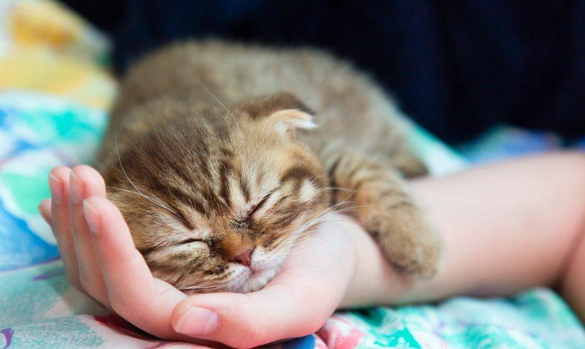 Come accogliere un nuovo Gattino in casa.