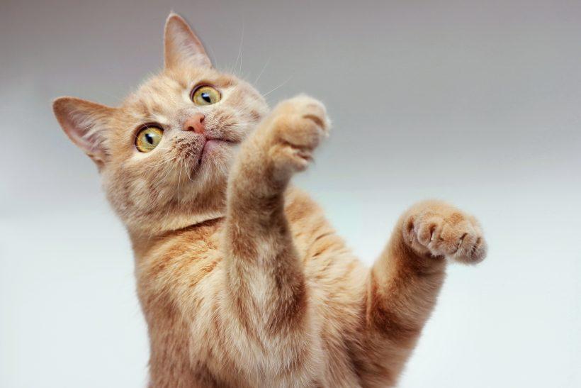Se il tuo Gatto è esuberante e sempre attivo (anche troppo!)…