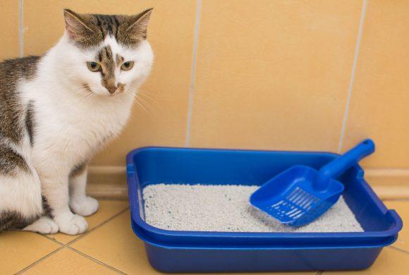 Se il tuo Gatto fa la cacca fuori dalla lettiera igienica…