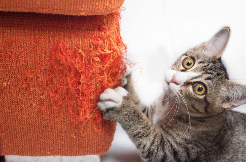 Se il tuo Gatto distrugge il divano con le unghie…