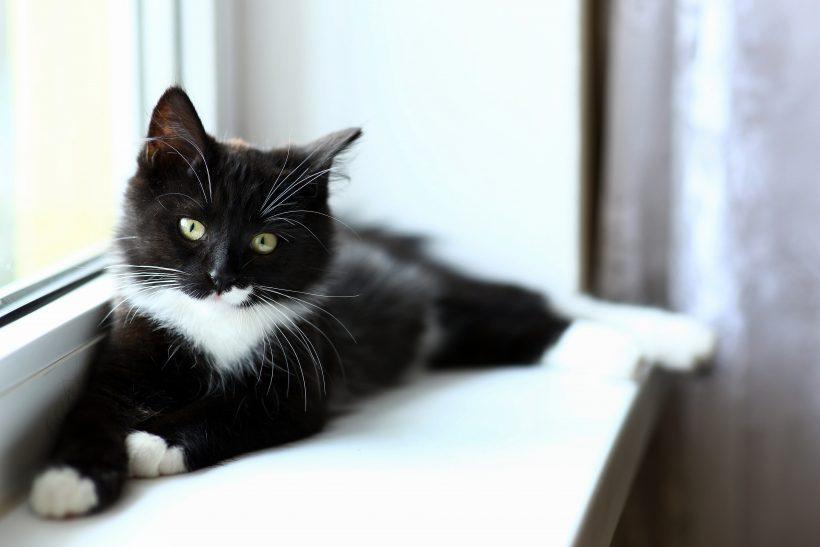 Se hai problemi particolari con il tuo Gatto che vuoi risolvere…