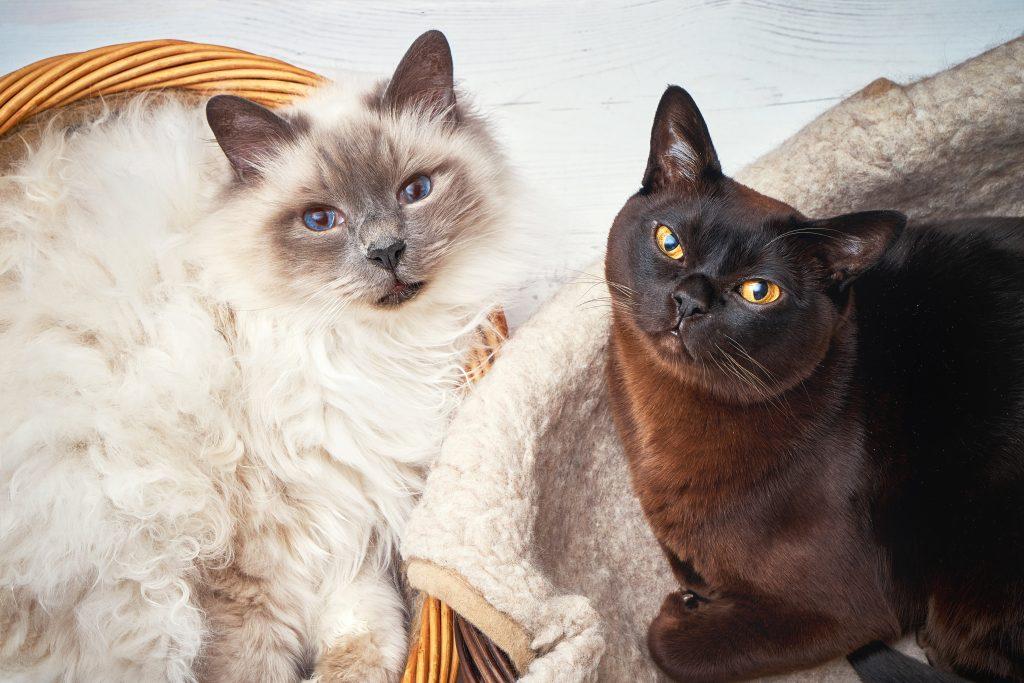 convivenza tra gatti felice