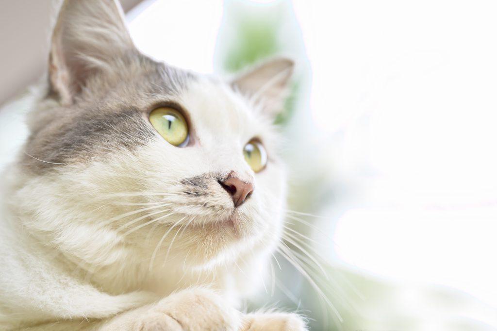 testimonianze sos gatto
