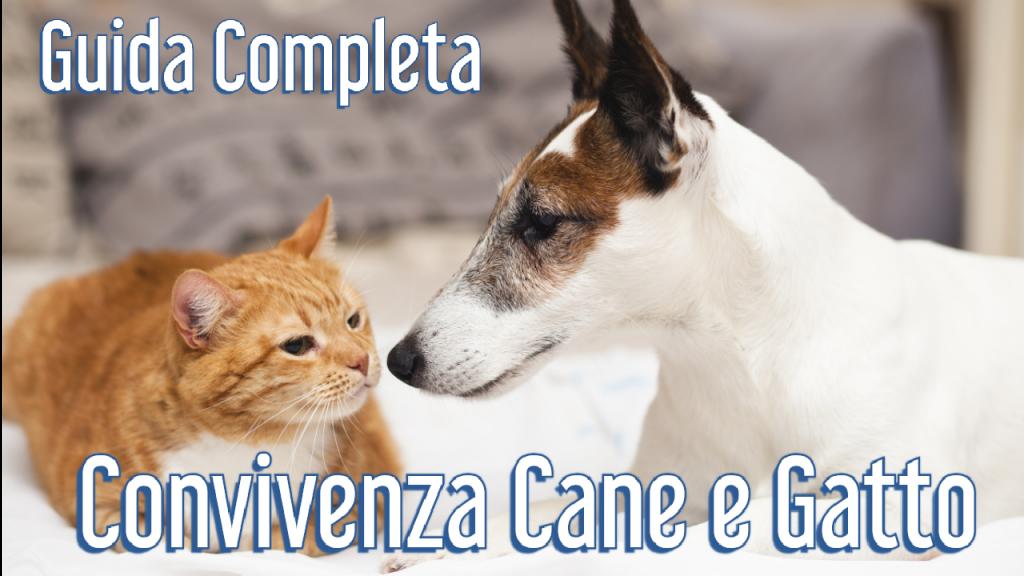 guida completa per la convivenza tra cane e gatto