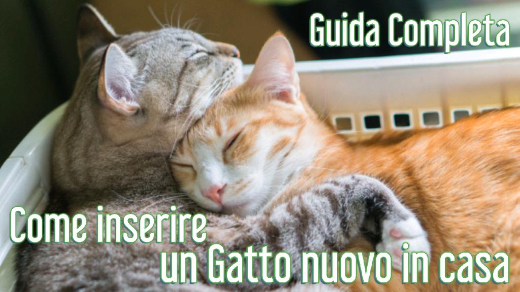 guida completa come inserire un gatto nuovo in casa