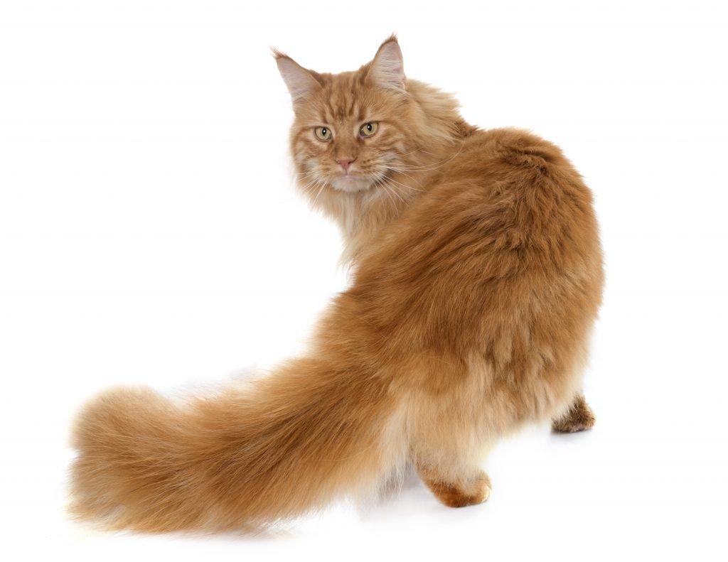 toelettatura gatti milano