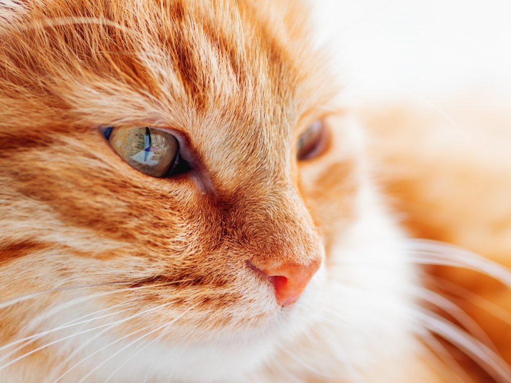 contatti sos gatto il 1° consulente felino olistico in italia