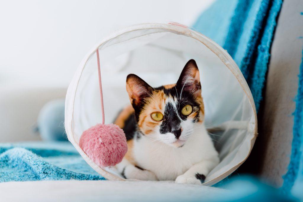 cat specialist store