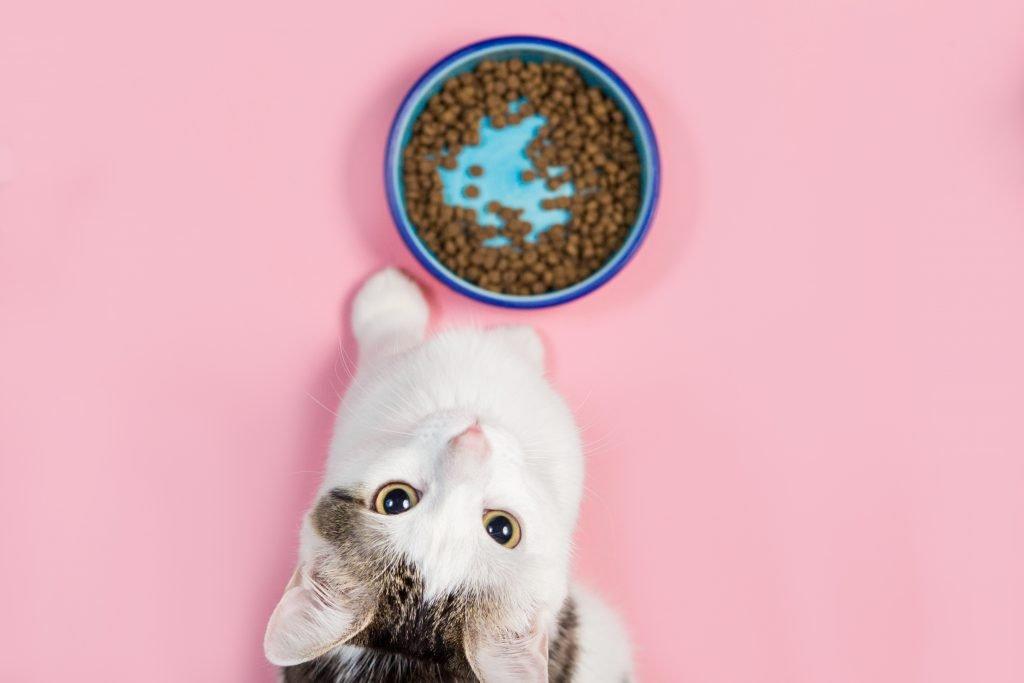 guida alimentazione gatto e cane