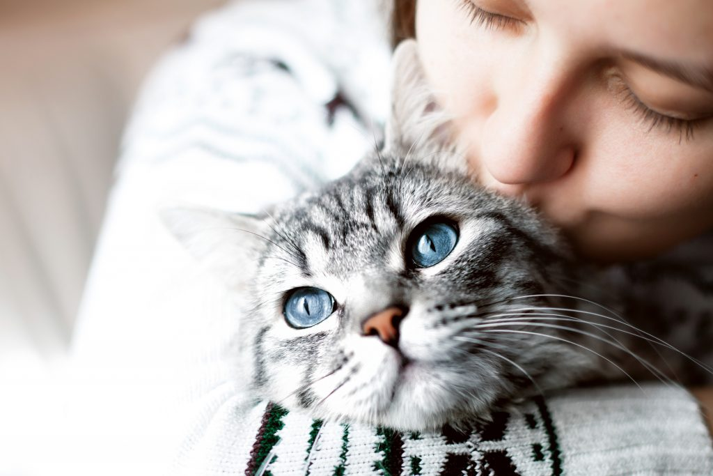 consulenza sos gatto consulente felino italia