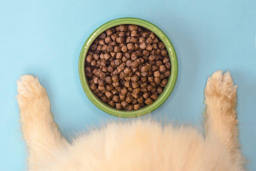 guida alimentazione cane e gatto