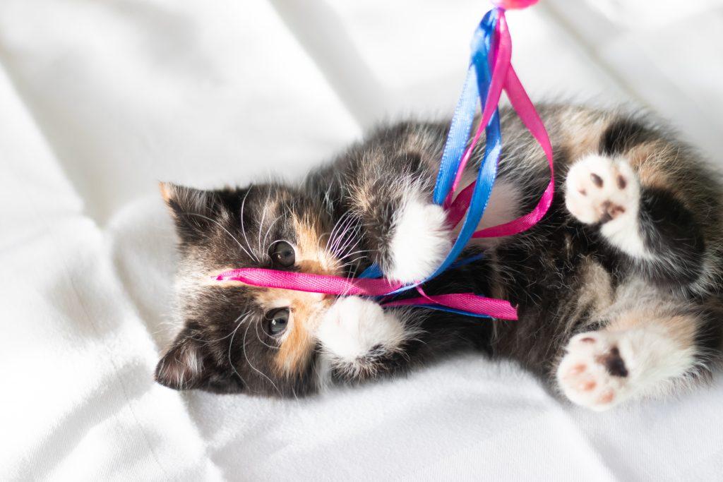 guida in regalo come giocare con il gatto sos gatto consulente felino