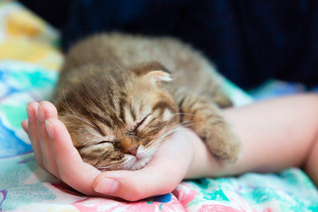 garanzia sos gatto