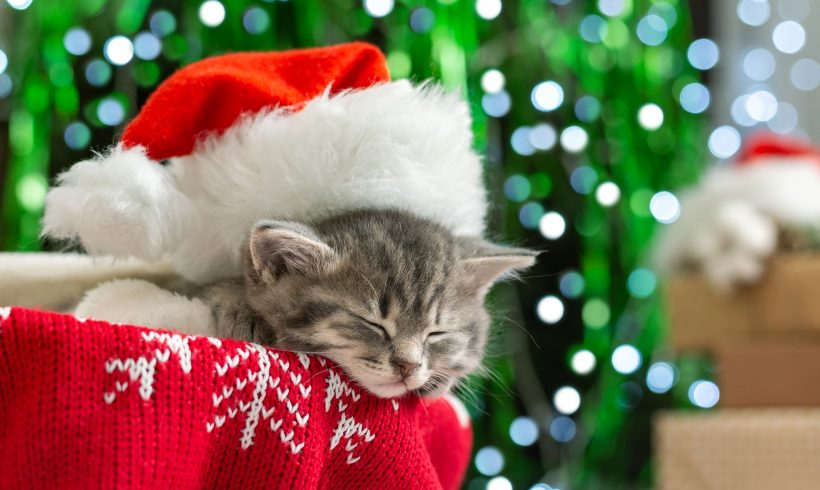 Idee Regalo di Natale per il tuo Gatto