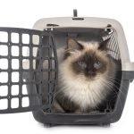 come educare un gatto al trasportino