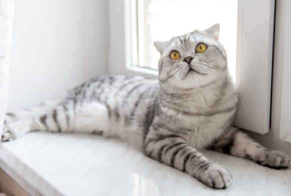 I 5 errori fatali che ti impediscono di risolvere i Problemi con il tuo Gatto (o Gatti)