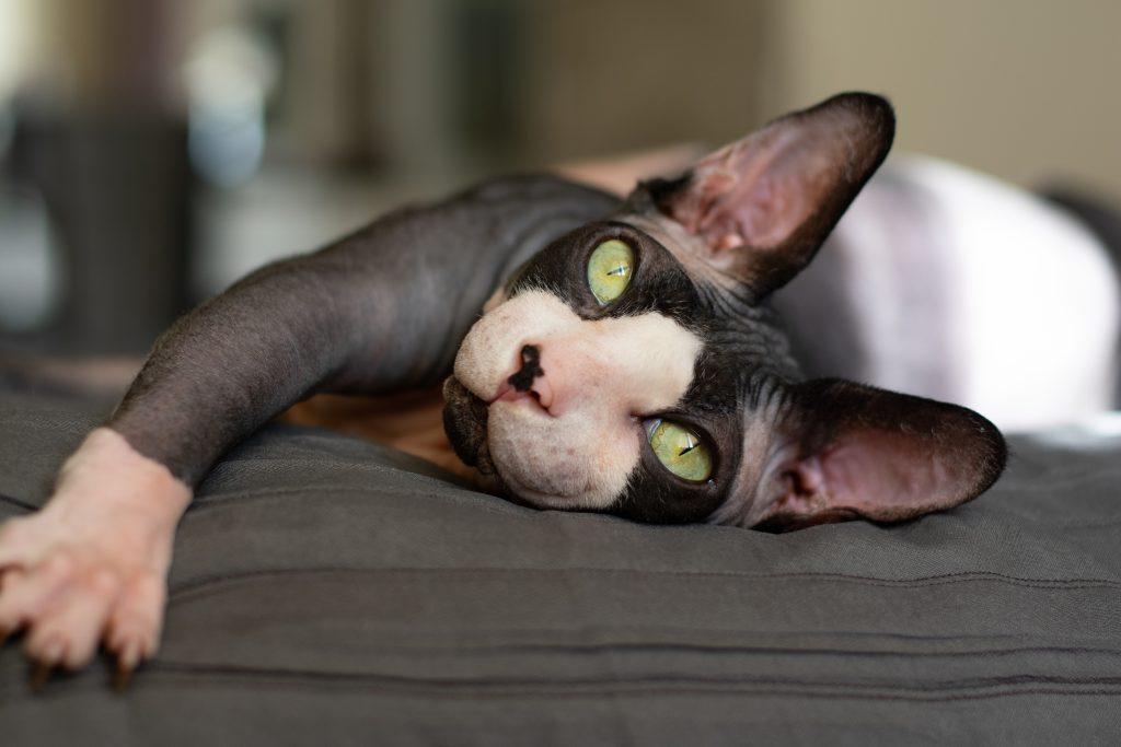 consulente felino sos gatto